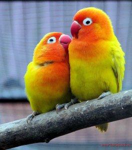 Приглашаем вас в Парк птиц «Воробьи»!