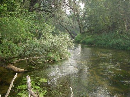 Река Лопасня – на грани экологической катастрофы ?!
